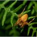 Spider On A Fern.