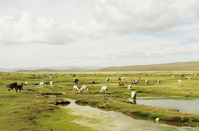 Peru Evens