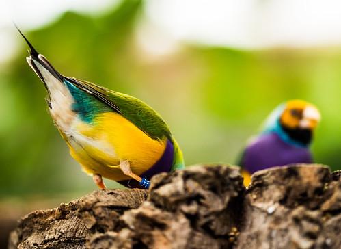 Bird Tail