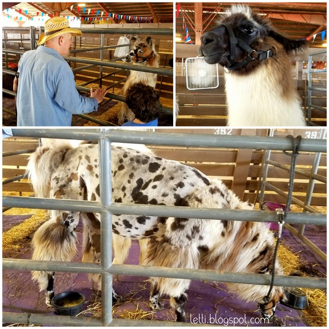 Sept 12 West Texas Fair and Rodeo25