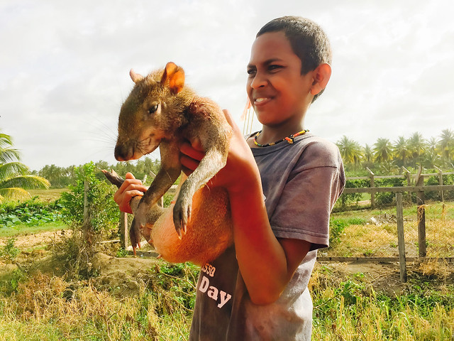 Teenager selling his Agouti, on the road between Mahaica and Georgetown