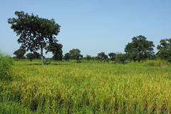 Bas Fond, Upper West, Ghana
