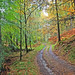 Autumnal Path in Atholl Woods