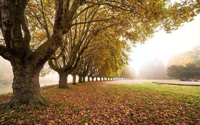 Saarbruecken | Im Herbst 18