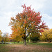 Small photo of Indian summer in Montreal