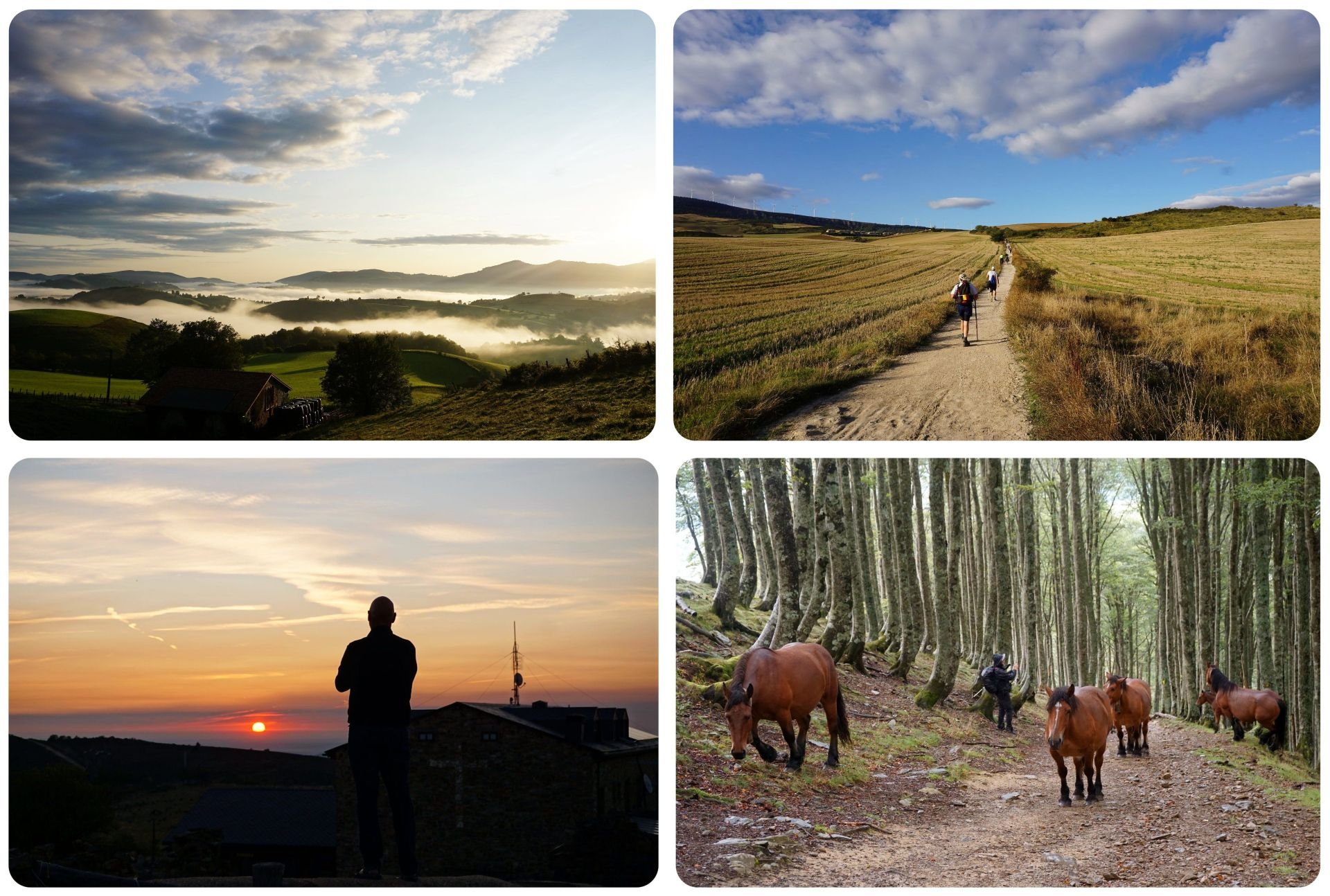 Camino de Santiago postcards