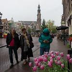 Obraz Amsterdam Tulip Museum. amsterdam prinsengracht jordaan westertoren kerk regen tulp tulips tulipmuseum