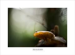 spot on autumn