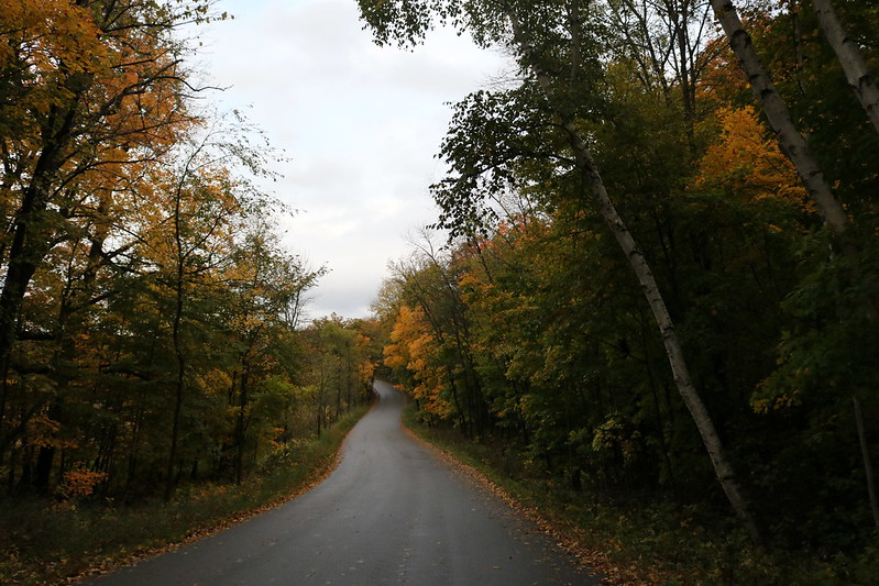 a paved road with trees lining both sides, mostly green, some yellow