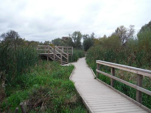 Boardwalk through Wetlands and Viewing Platform, Morden Hall Park