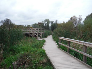 Boardwalk through Wetlands and Viewing Platform, Morden Hall Park