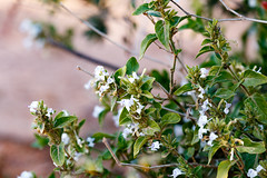 Close up of white flowers growing