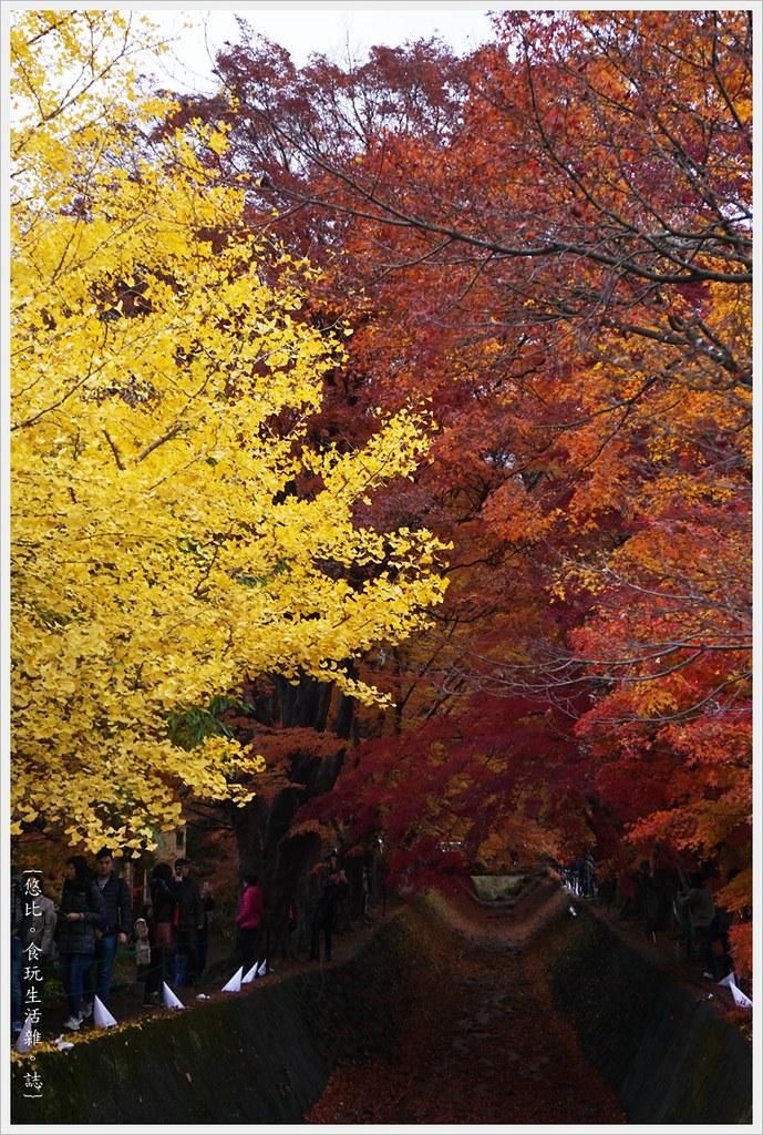 紅葉迴廊-紅葉祭-白天-30