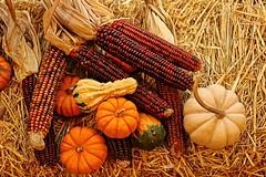 the symphony of autumn