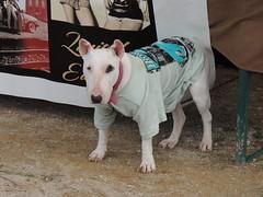 dog & t-shirt (1)