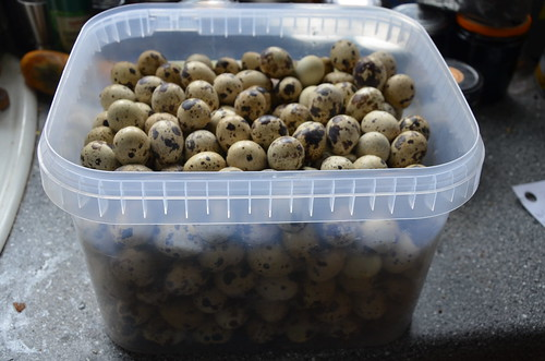 quail eggs Oct 17