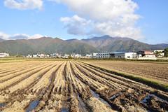 Inawashiro rice fields