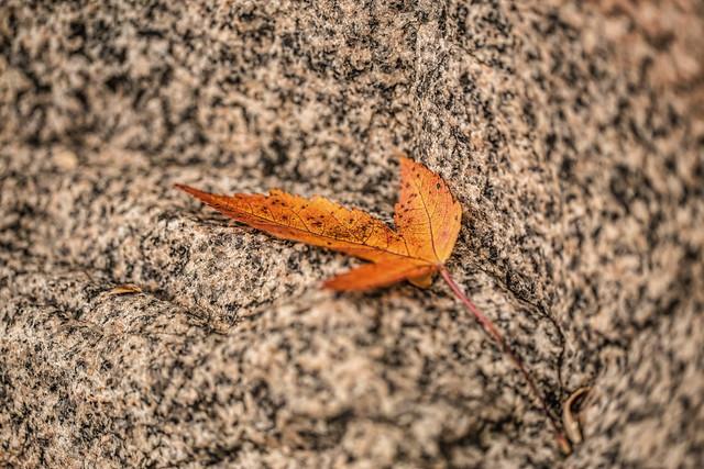 Fall on a Rock