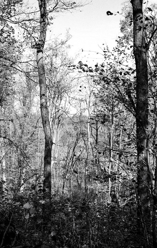 Monochrome Fall Trees_