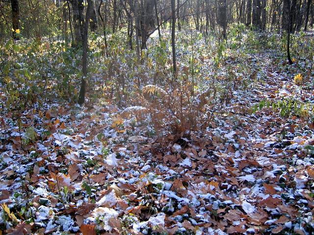 Снег в октябре. Snow in October., Canon DIGITAL IXUS 500