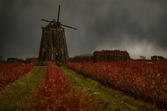 autumn in Bia ousy, Sony ILCA-99M2, Tamron SP 70-200mm F2.8 Di USD