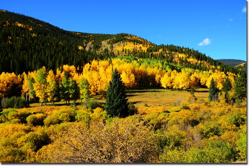 Fall colors, Mount Evans Scenic Byway, Colorado (16)