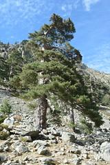Gorges de la Restonica, Corsica: