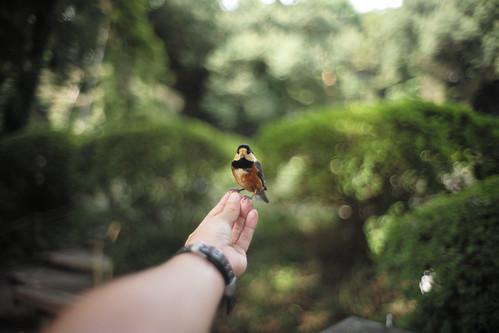 Hand riding wild bird