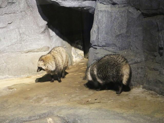 zoo singapore Gradini si Parcuri din Singapore 1