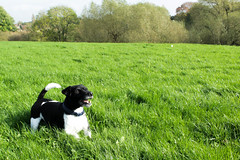 Patterjack in the grass