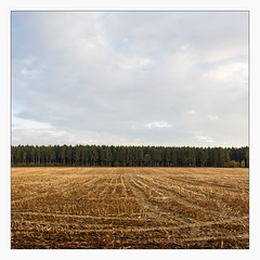 _edge_of_harvest