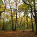 Hockley Woods, Essex