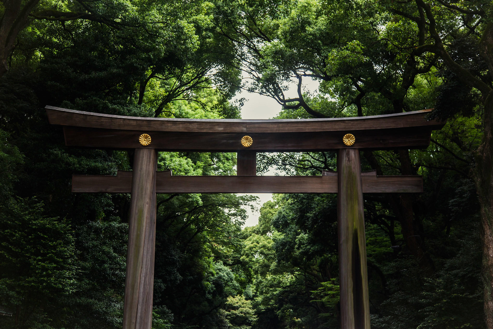Yoyogi Park | Tokyo