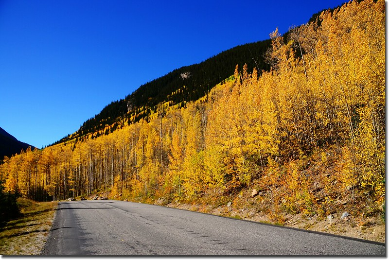 Fall colors, Guanella Pass, Colorado (34)