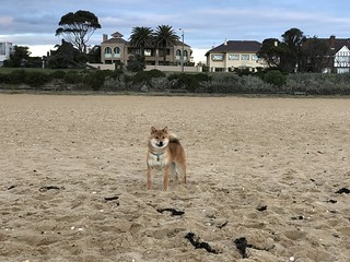 nug beach