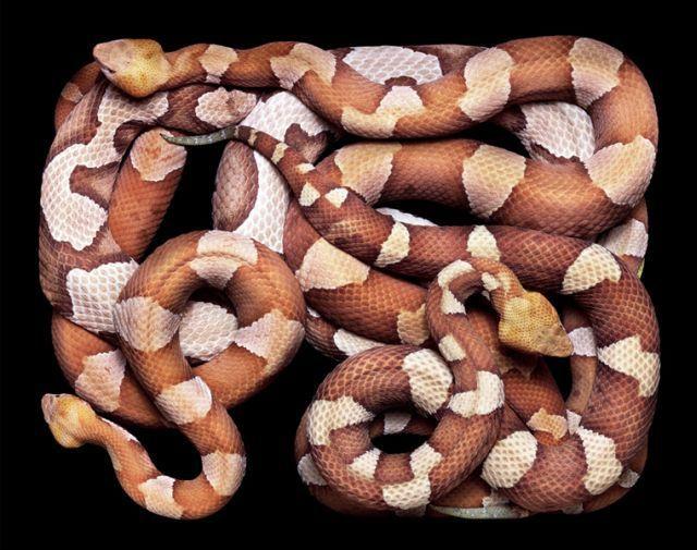 snake_art_14