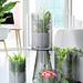 Kontrastreiche Inszenierung der erfrischenden Zimmerpflanzen