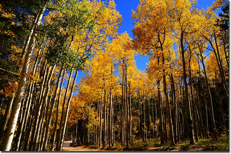 Fall colors, Kenosha Pass  (43)