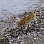 2011-09-07_17-01-30 - Hund - Wasser - Spielzeug