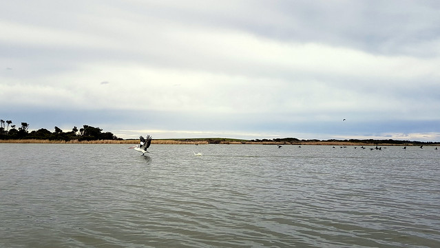 Featured medium photo of Point Sturt on TripHappy's travel guide