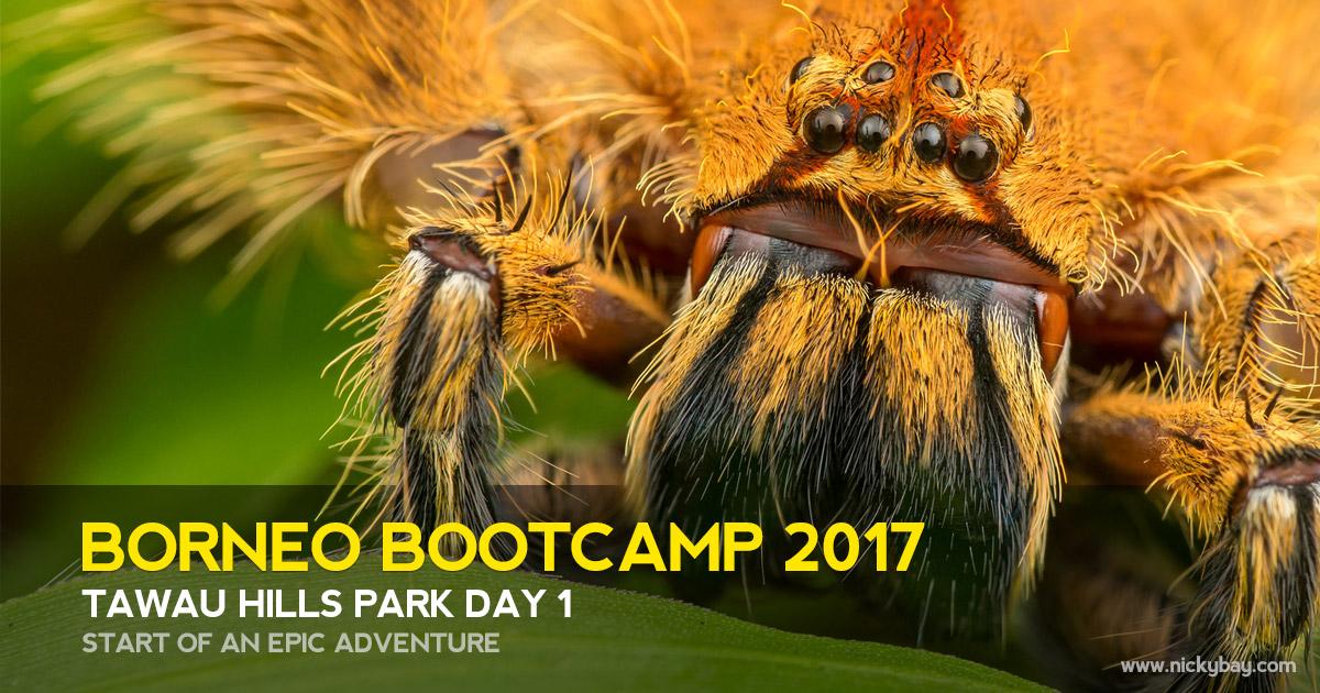 Borneo Bootcamp 2017 - Tawau Hills Park Day 1