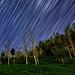 Star trails at ginkgo forest 大崙山銀杏森林星軌