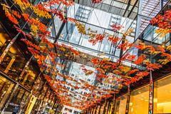 CityCenterDC Celebrates Fall