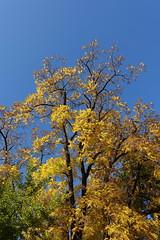 Autumn colors @ Jardins de l'Europe @ Annecy