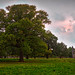 Ophelia sun in Bushy Park