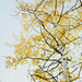 Aspens In Evergreen by Garrett Hoppes