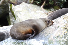 sleepy in New Zealand