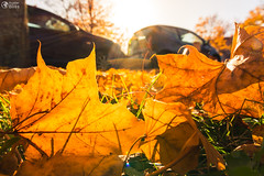 Ground Leaves Fall Autumn Changing Seasons Sun Flare Outdors Daytime Parking Lot
