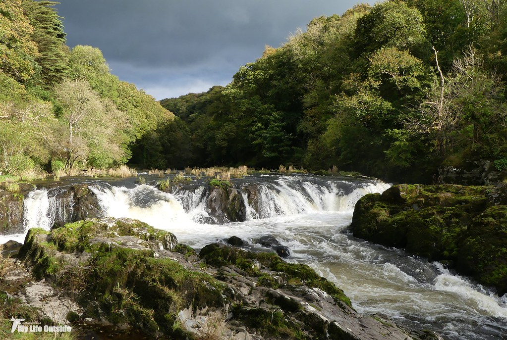 P1120622 - Cenarth Falls