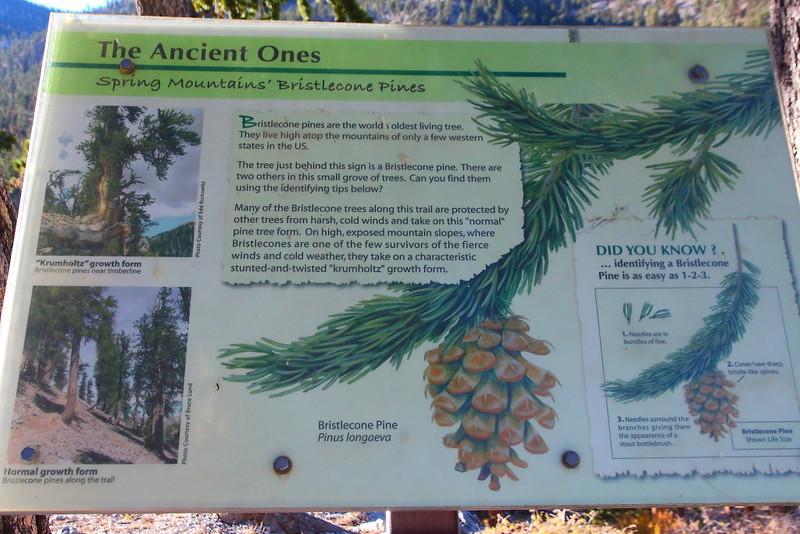 IMG_1443 Bristlecone Pine Trail